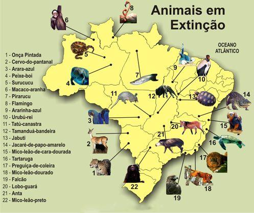 Animais em extinção no Brasil » Defensores da Natureza