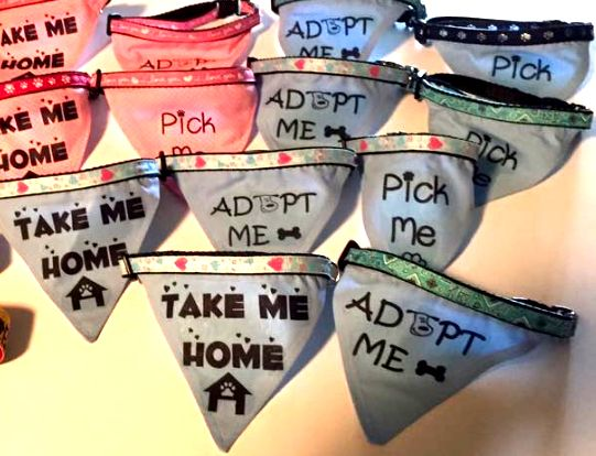 Help get dogs noticed when they're out on walks or at offsite adoption events by making colorful and fun Adopt Me bandanas—a stylish way to let folks know a dog is available! Great project for kids and volunteers!