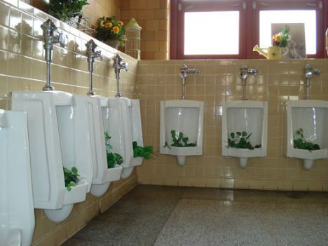 Urinal garden  Growing Plants That Defy All Odds • Page 4 of 6 • BoredBug