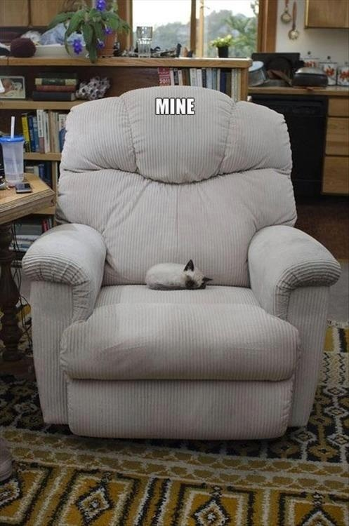 mine my dad would and has let his cat have his favorite chair on several occasions even if it meant his back would hurt from the harder chair love my dad