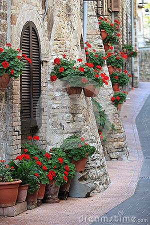 Geranium flowers in the streets of Assisi village, Umbria, Italy.