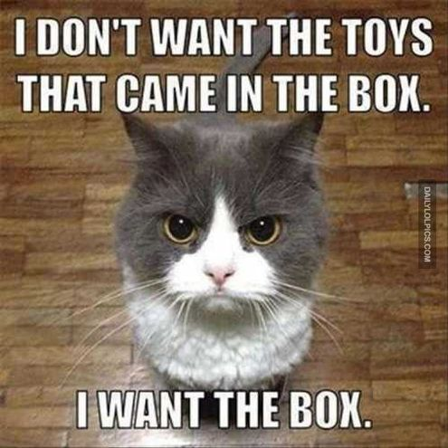 40 Funny Animal Pictures – Funnyfoto | Funny Pictures - Videos - Gifs