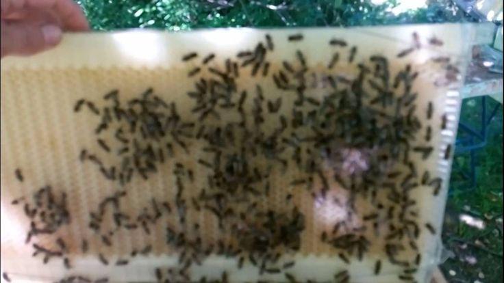 Улей из которого вытекает мёд. Тест в России. 3 часть
