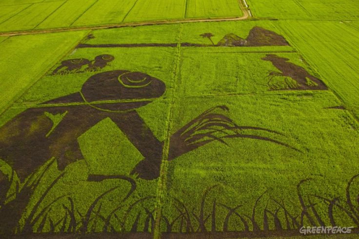 aerial-view-of-rice-art-dep.jpg (800×533)