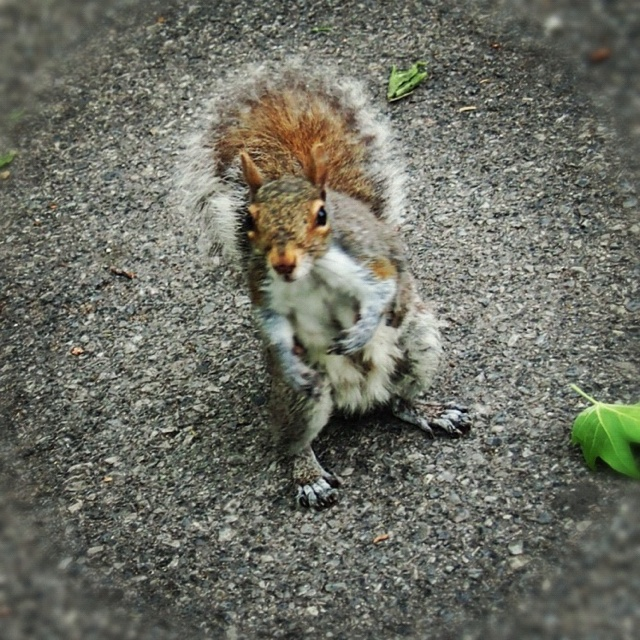 The coolest squirrel in NYC!