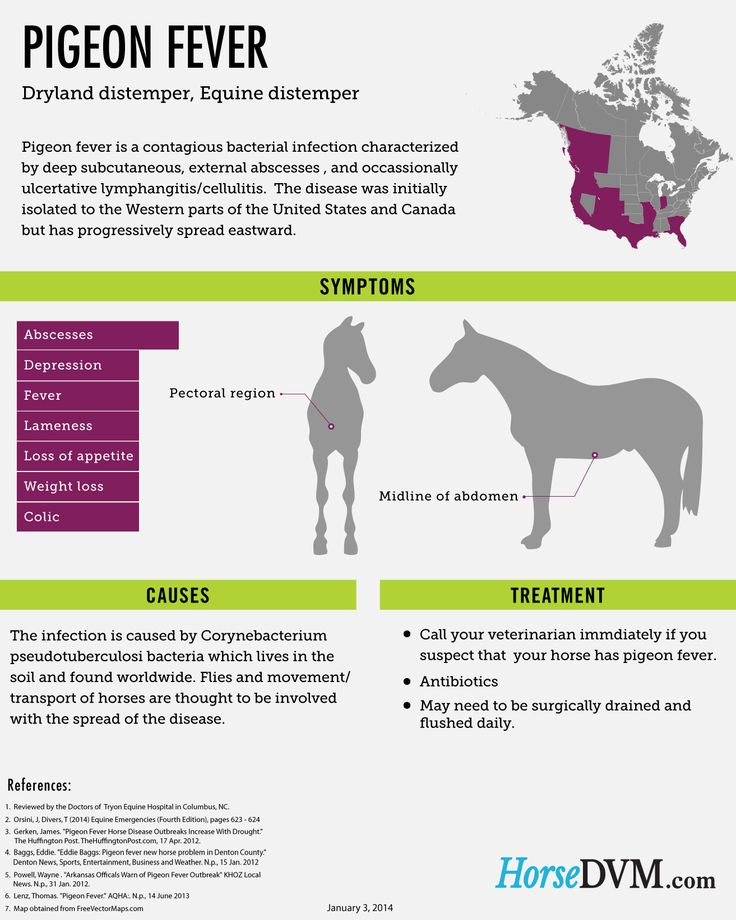 Pigeon Fever is an infectious bacterial disease of horses which has had recent outbreaks throughout the United States. Get to know what signs to look