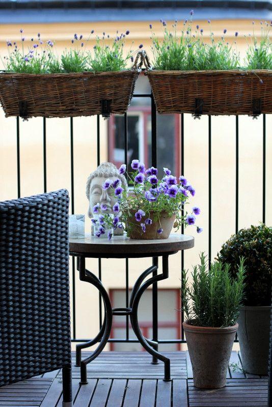 lavender, rosemary, viola