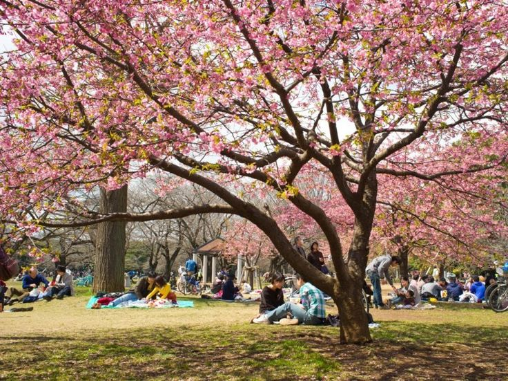 Picnicking in Yoyogi Park