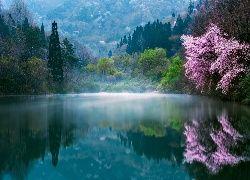 Kwitnące drzewa nad zamglonym jeziorem w Korei Południowej