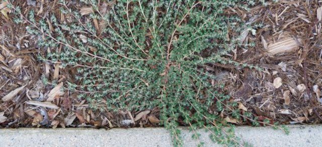 how to stop grass weeds in raised garden