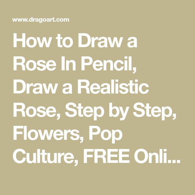 how to draw a realistic flower in pencil