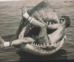 You see? Harmless. #sharkweek #jaws