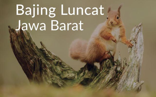 Lirik Lagu Bajing Luncat - Jawa Barat