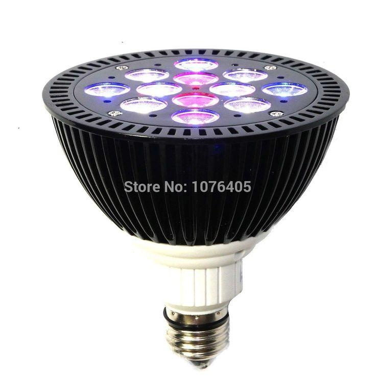 Coral Reef Light Bulbs
