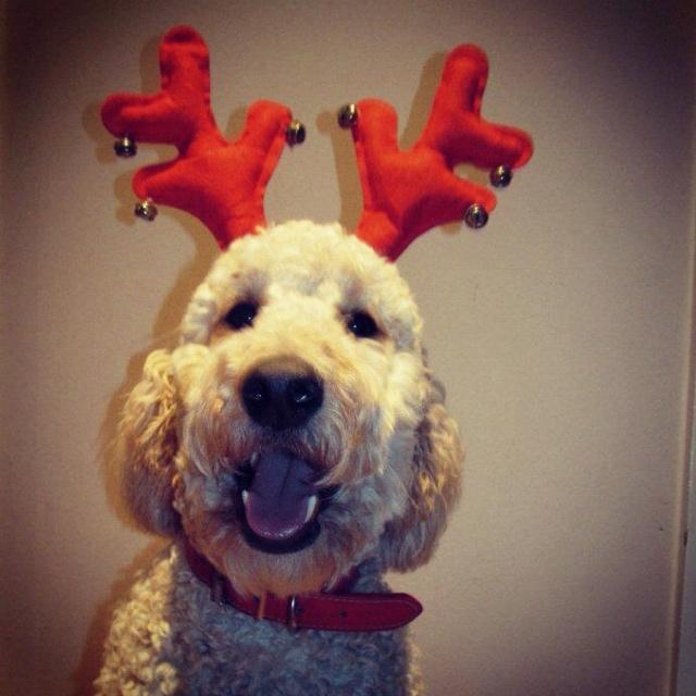 Dog Toy Christmas Lights