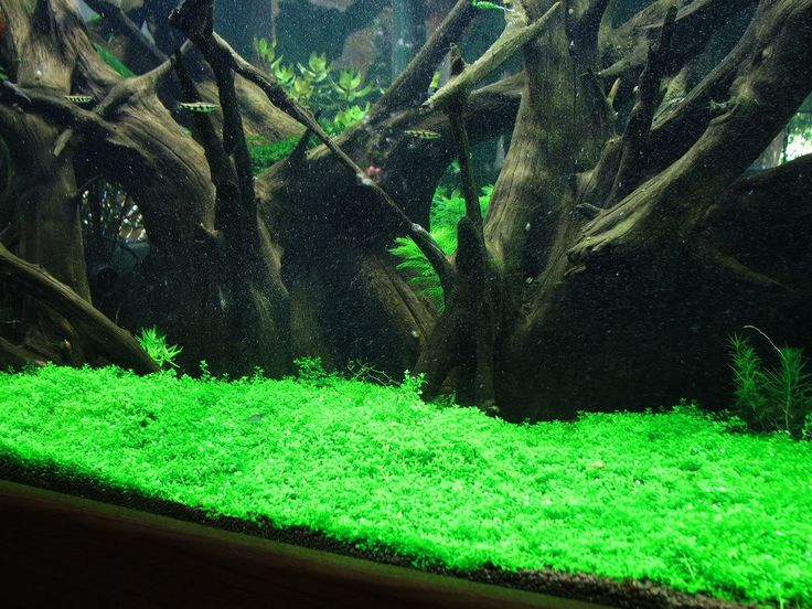 Dsm dry start method for starting a new planted tank for Co2 fish tank