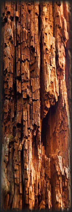 closeup bark tree #photo via: shotsinnature.tumblr.com
