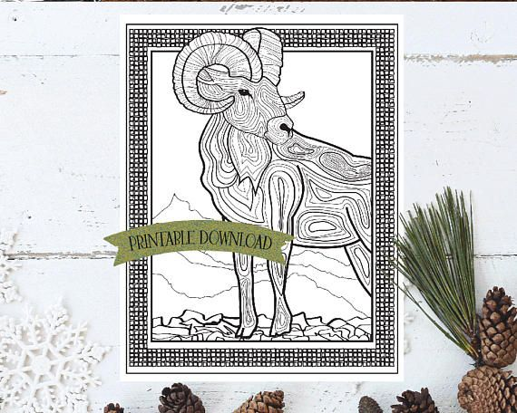 Coloring Page - Bighorn Sheep Rocky Mountain Animal // INSTANT DOWNLOAD // Manifestation and Meditation Colouring Page