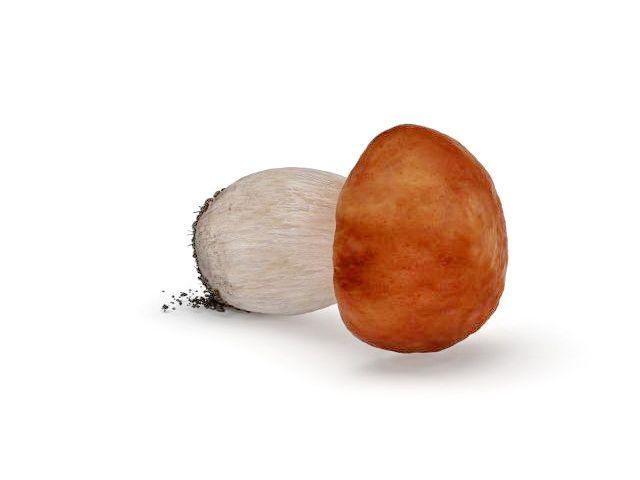 Wild mushroom 3d model
