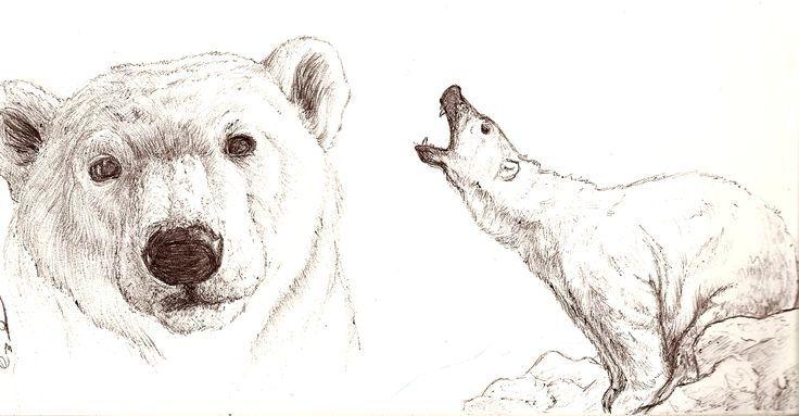 realistic polar bear drawing - Google Search
