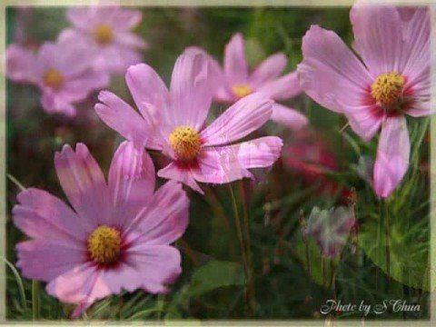 Little flowers...if it never ever rained, then we'd never, never grow...