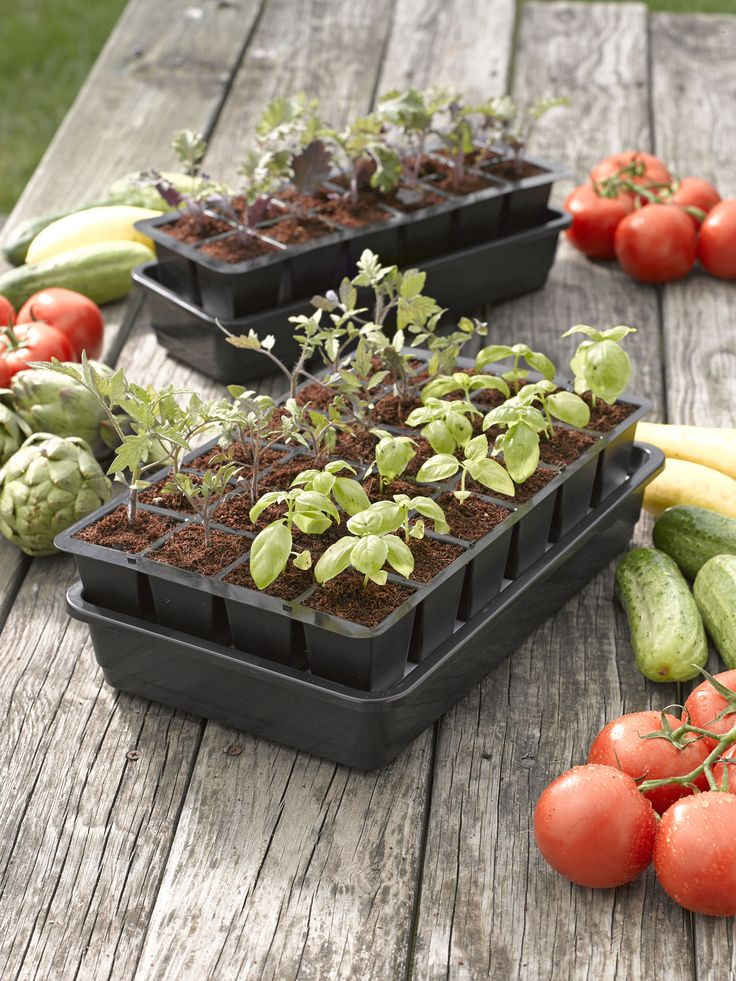 seed starting grow kit seed starting mix and supplies