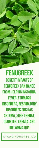 Benefit impacts of fenugreek can range from helping insomnia, fever, stomach disorders, respiratory disorders such as asthma, sore throat, diabetes, anemia, inflammation, ulcers, fever, and dandruff.