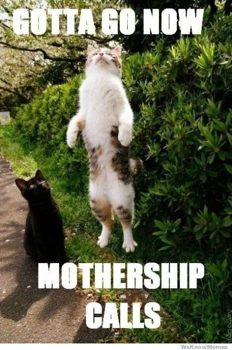 gotta-go-now-mothership-calls: Funny Animals, Funny Cats, Pet, Funny Stuff, Funnies, Things, Photo, Kitty
