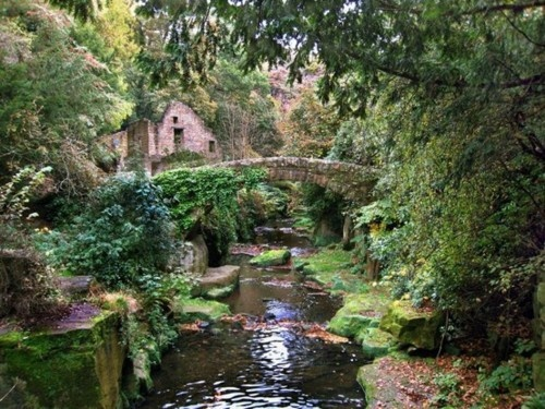 Jesmond Dene, Newcastle upon Tyne, England. Played here as a kid all summer.
