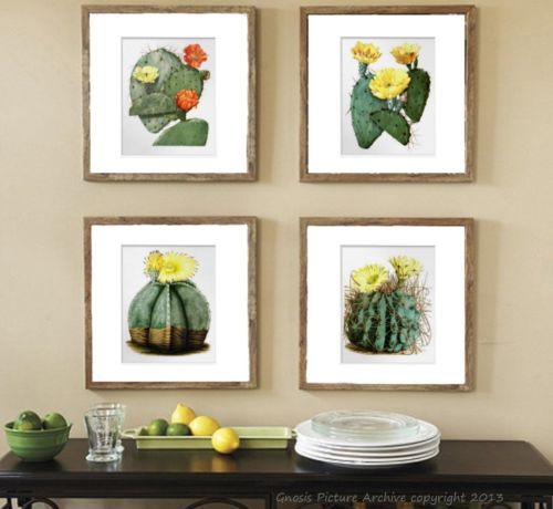 Vintage-Botanical-Art-set-of-4-prints-Flowering-Cactus-Southwestern-wall-Decor