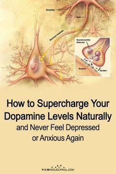 How to Supercharge Your Dopamine Levels Naturally and Never Feel Depressed or Anxious AgainPatrik Engelbrecht