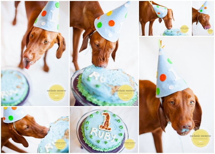 9 best Dogs images on Pinterest Dog cakes Pet photographer and