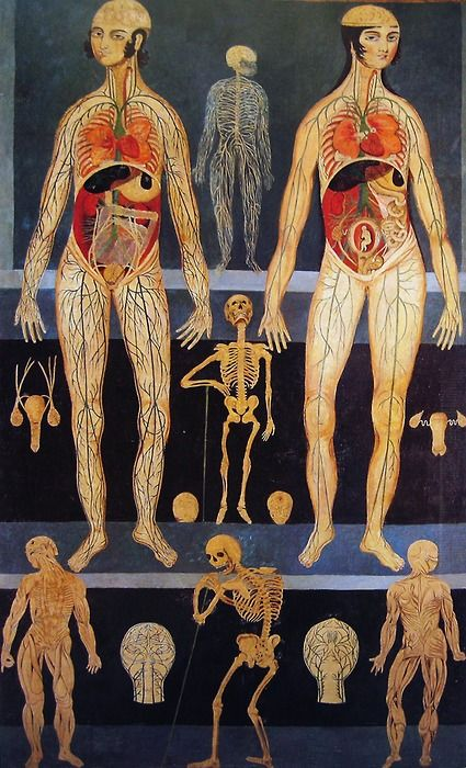 Anatomical painting probably used for teaching purposes. Iran, second half of the 19th century