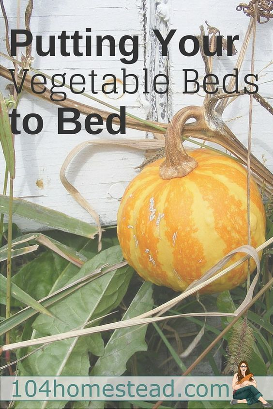 Get tips for putting your vegetable beds to bed for the winter. These tips will help you have an amazing garden in the spring.