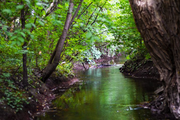 Stillwater Makes A Great Start To A Peaceful Mindset Boccittographics Nature Tree Trees River Water Peace T Still Water Nature Photography Nature L
