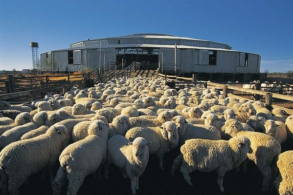 Isis Downs Shearing Shed, Isisford, Queensland