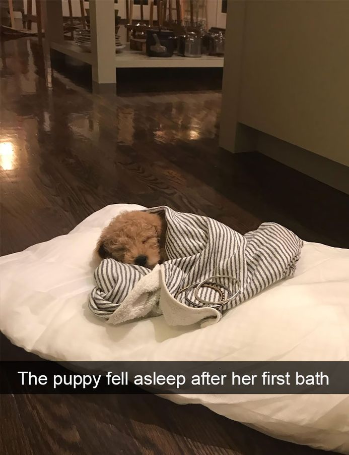 Funny Snapchats Dog Photo – 190 Pics
