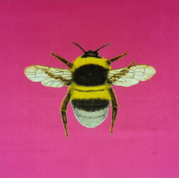 Velvet Bumblebee Cushion Panel Sherbet  £6