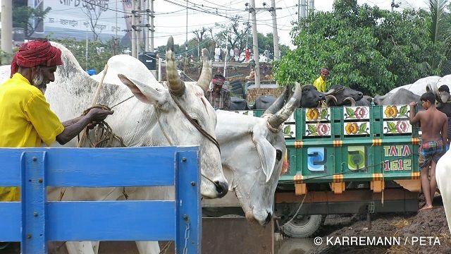 Leona Lewis contra a crueldade com os animais no Bangladesh
