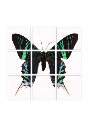 -16,800% OFF Art Addiction Acrylic Printed Green Butterfly, Polyptych