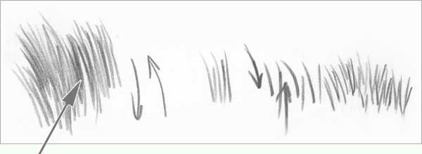 draw grass