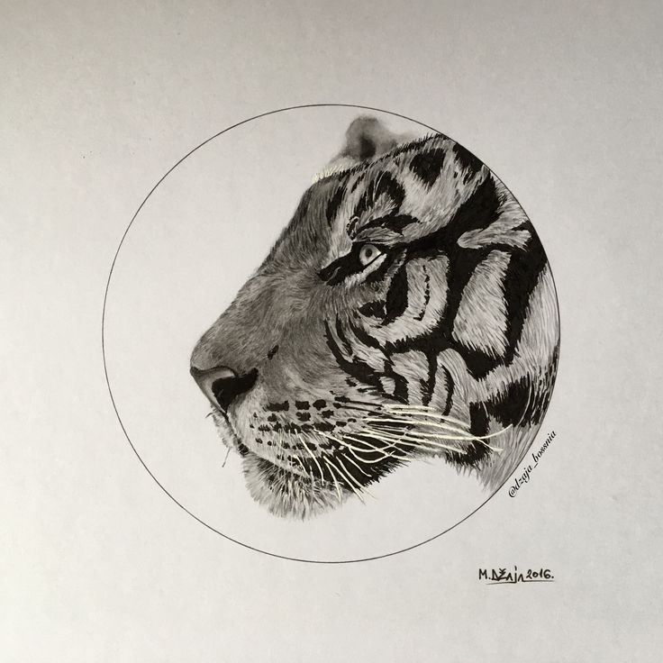 Tiger illustration done with graphite pencils and Uni Pin fine line  #tiger #illustration #unipin #graphitepencil #graphicart #art #drawing #tigerdrawing #design