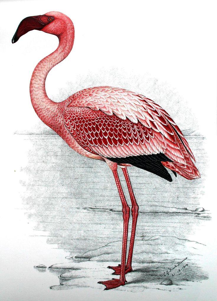 Flamingo Painting Images