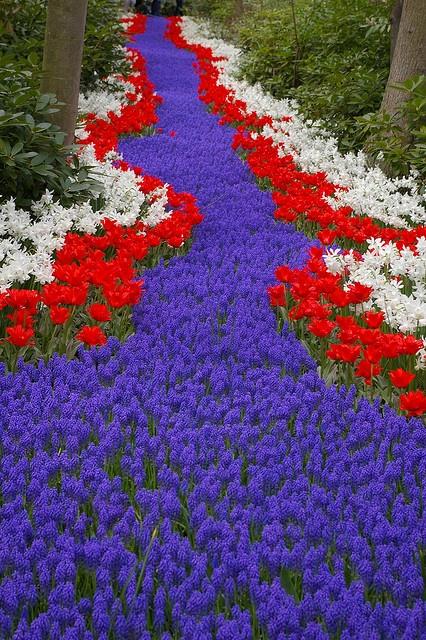 17 best images about jardin de keukenhof holanda on pinterest gardens spring garden and tulip - Jardines de tulipanes en holanda ...