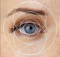 Human eye showing golden ratio proportions