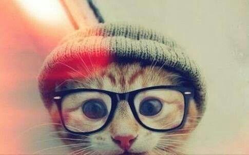 I put my glasses for my cat