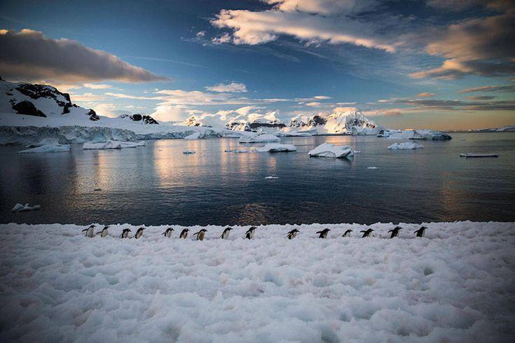 Penguin Awareness Day Photography – Fubiz Media