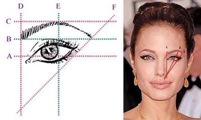 More measurements for The perfect brow.