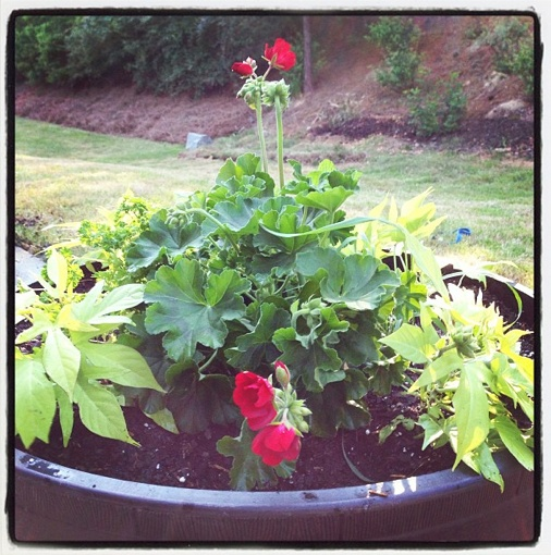 Image Result For Visual Display Garden Center: 1000+ Ideas About Whiskey Barrel Planter On Pinterest