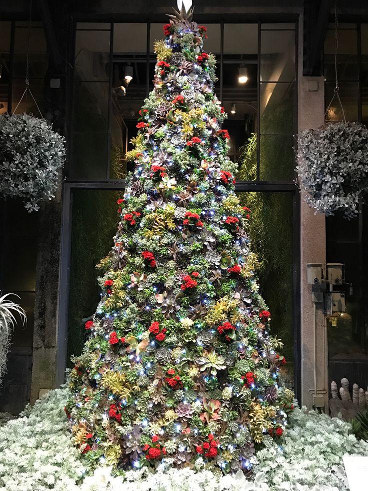 Christmas Tree made with all fresh succulents at Longwood Gardens Pennsylvania USA  Christmas